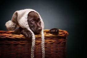 choisir-chien-enfant